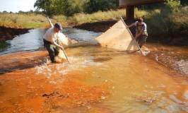 Graduate students John Coffin and Bryan Frenette pulling a seine net through a creek in Oklahoma to catch fish in water polluted with heavy metals (why the water is so orange).