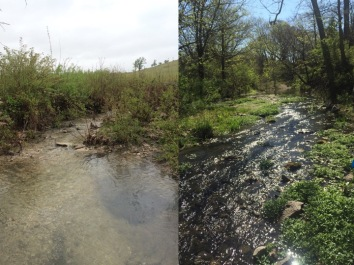 A section of grassland stream surrounded by grasses and shrubs (left) and a second section with tree canopy cover (right). Sophie conducts her experiments in both types of habitats to look for differences in carbon processing.