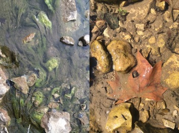 Algae (left) release simple carbon compounds while tree leaves (right) release more complex carbon compounds that are not as easy for microbes to use for energy.