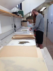 Graduate student Seton Bachle looking using herbarium specimens to investigate the effects of increased nitrogen deposition.