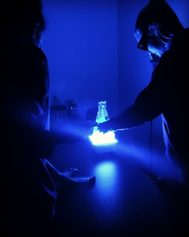 Middle school students learn about microbial cooperation and quorum sensing while becoming young scientists for a day. Here we see a culture of the bacteria Vibrio fischeri illuminated by a blue light transilluminator.