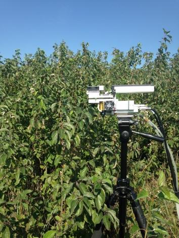 Measuring_photosynthesis_on_a_dogwood_shrub