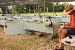 Garrett Hopper recording metabolism data during a mesocosm experiment at the Konza Prairie Biological Station. Photo Credit: Ella Magerl