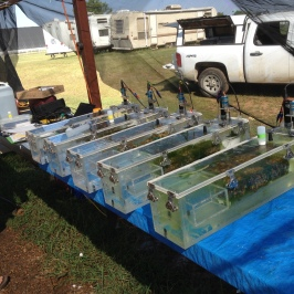 A metabolism chamber experiment in progress. The experiment is testing the effects of different combinations of fish and mussel biomass on ecosystem metabolism and nutrient uptake. Photo Credit: Garrett Hopper