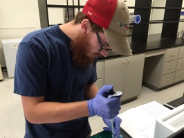 Graduate student Ryan Greenway uses a pipette to combine chemical ingredients with dissolved fish gill tissue to isolate RNA for sequencing.