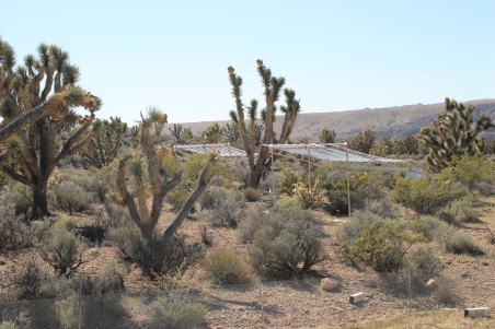 A rainfall manipulation experiement in the Mojave Desert. Photo credit: Rory O'Connor