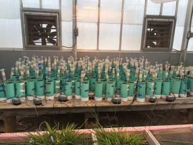 Soil chambers in the greenhouse