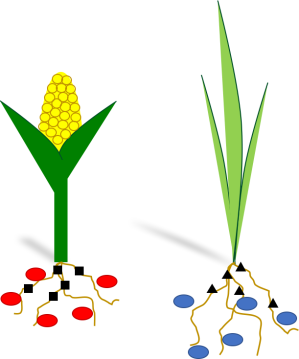Plants and their root microbes