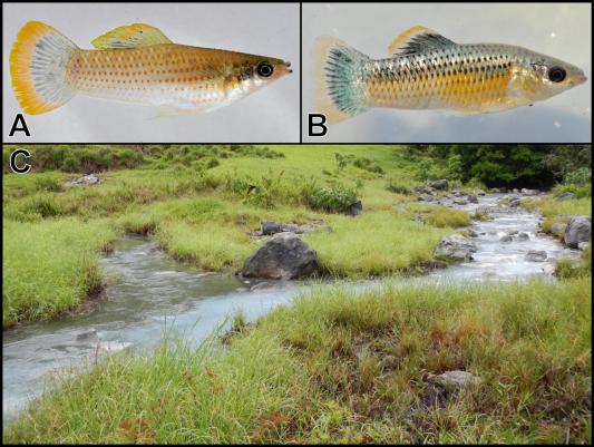 Sulfidic habitats and fish